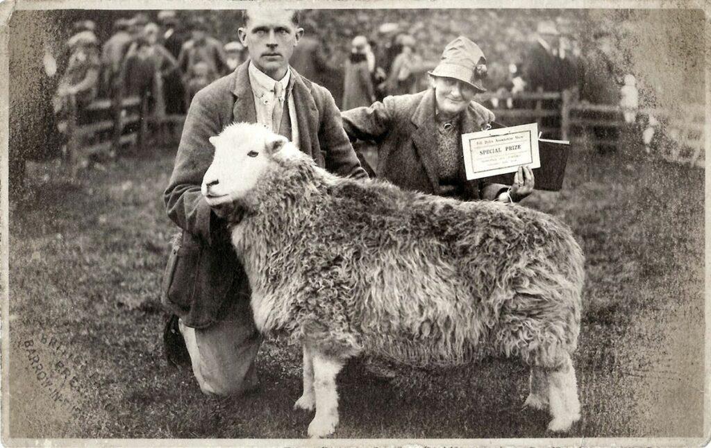 Beatrix Potter concours de Moutons