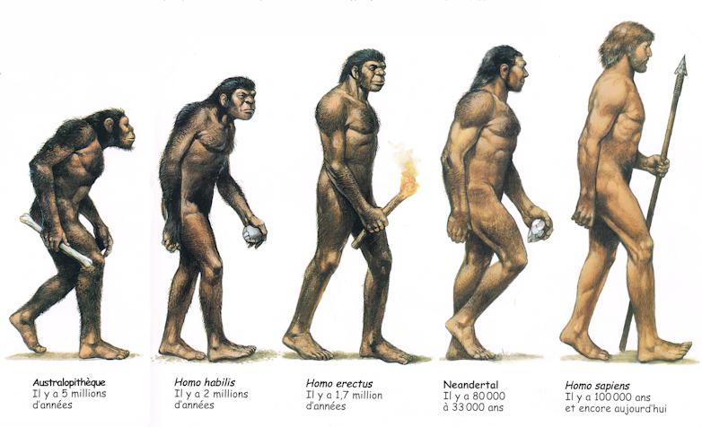 Australopithèques