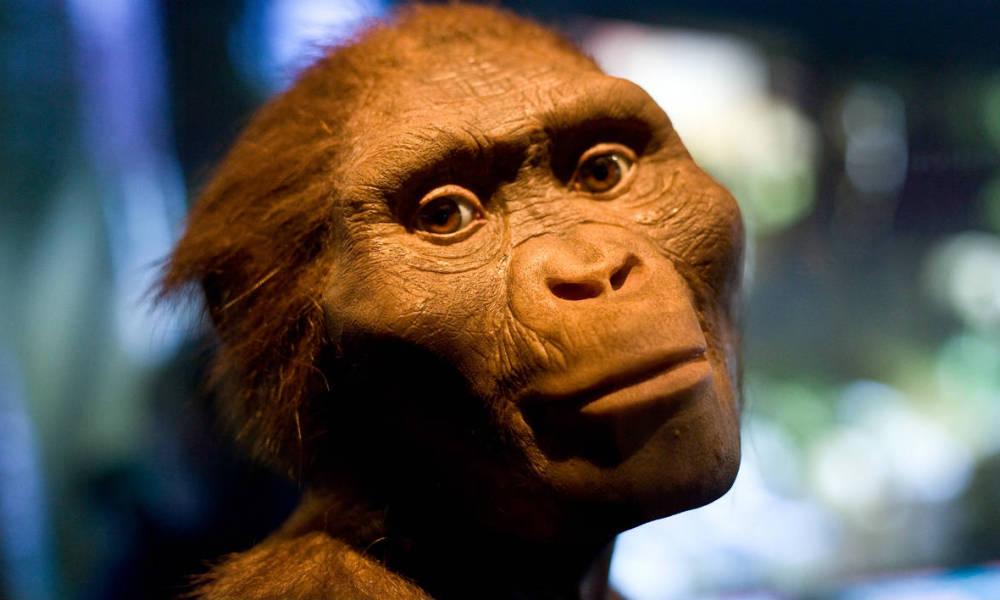 Lucy l'Australopithèque photo BFMTV